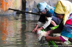 Vegetable washing. Yunnan, China - 2012